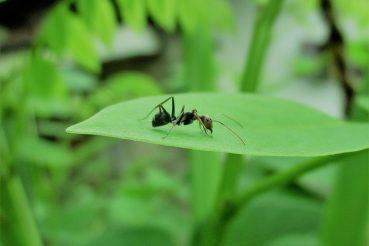 bajka o mrówce